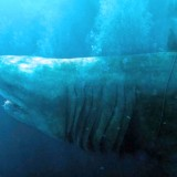 'The Meg' Surprisingly is at the Top Position of US Box Office