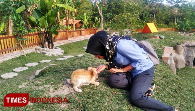 Bondowoso to Have Rabbit Park like the One in Yogyakarta