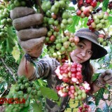Get the Exquisite Taste of East Nusa Tenggara Coffee at The World Economic Forum