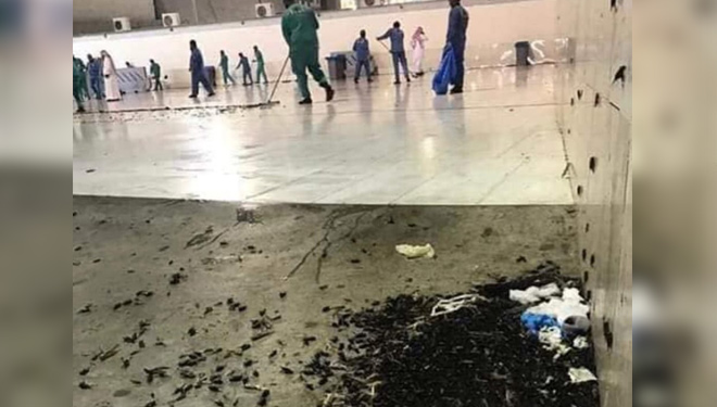 Millions of Insects are in the Grand Mosque Mecca