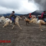 Accidental Horse Race at Bromo's Desert