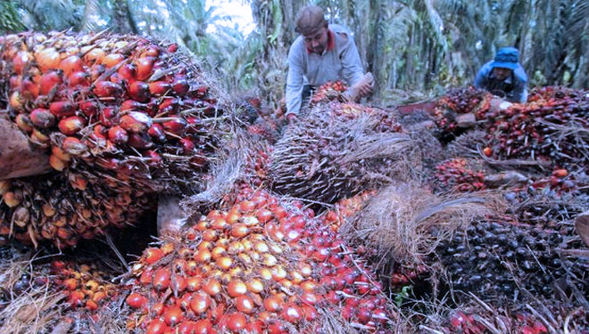 Gasoline from Palm Oil? This is Indonesia!!!