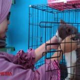 'Hotel Kucing', the Best Place to Board Your Cats while You Are on Vacation