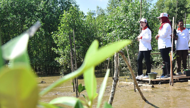 Thousands of Mangrove Planted on Tanjung Api-Api South Sumatra