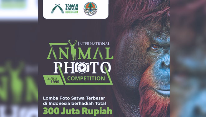 Come Join the International Animal Photo Competition at the Taman Safari Indonesia