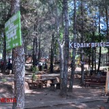 Enjoy Your Meals at an Outdoor Food Court at the Plapar Pine Forest in Kediri
