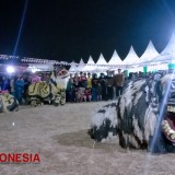 7 Lions of Singo Arema Performed at Tawangargo Feat Coffee Festival