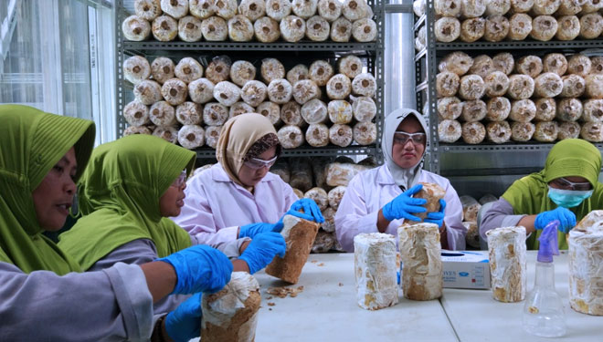 Mycotech. (Picture by: Titik Rusmiati for TIMES Indonesia)