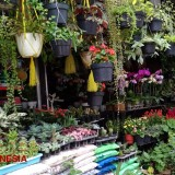 Visit Pasar Bunga Splendid Malang and Choose Your Most Favorite Flower to Go