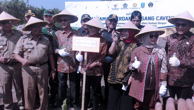 The Local Government of Bondowoso Planned to Grow the Cavendish Banana on Their Area