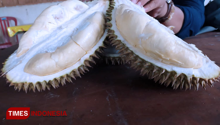 'Durian Kanjeng': A Special Durian for the Nobles at Kampung Durian Ponorogo