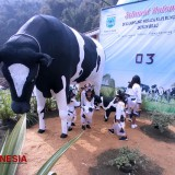 Learn How to Make Milk from Scratch at Wisata Edukasi Susu Dusun Brau