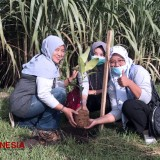 The Students of UIN Malang Ways to Support Green Recovery