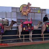 Ramp Up Your Vacation with Baloga Camel Ride of Batu