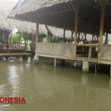 Saung Oemah, Best Place to Enjoy Grilled Fresh Water Fish