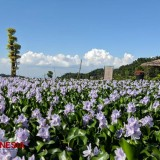 Refugia Garden Magetan will Mesmerize Your Eyes with All Blooming Flowers