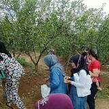 Visit This Orange Orchard at Ciamis and Taste the Sweetness