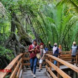 Get a Peaceful Ambience at Gamtala Mangrove Forest West Halmahera