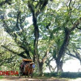 Get This Free Shuttle Service When You Visit some Tourist Destinations in Banyuwangi